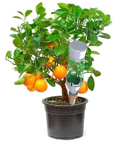 Автополив комнатных растений Центролит